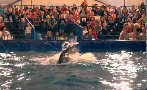 Московский дельфинарий 1