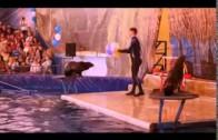 Московский дельфинарий 2