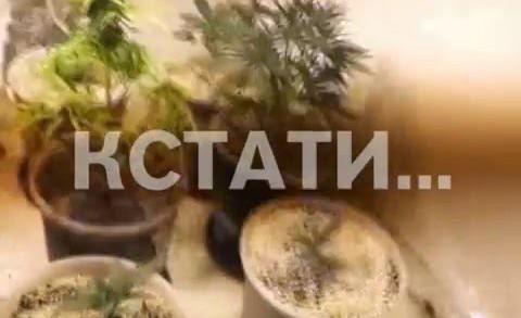 Наркоторговцы-агрономы задержаны в Ленинском районе