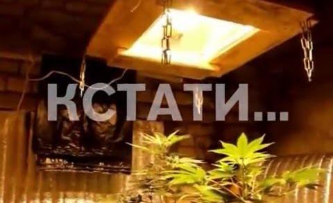 Подвальная нарко-плантация выросла в центре города