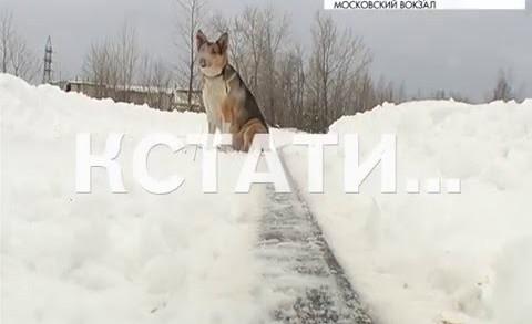 Хатико по-нижегородски — случайно выпрыгнувший из электрички пес, вторую неделю ждет хозяина