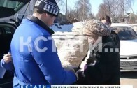 Осторожно! Карантин! Собаки разодрали больную бешенством лису в Автозаводском районе