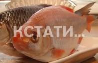 Поймал дед золотую рыбку — уникальный улов дзержинского пенсионера