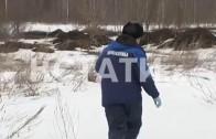 Путь к здоровью нижегородских лис лежит через желудок