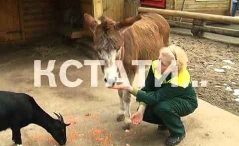 В нижегородском зоопарке животных угощали блинами