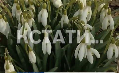 В Нижний Новгород пришла весна