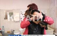 Бешенство в городе — хозяева домашних животных выстроились в очередь за вакцинацией