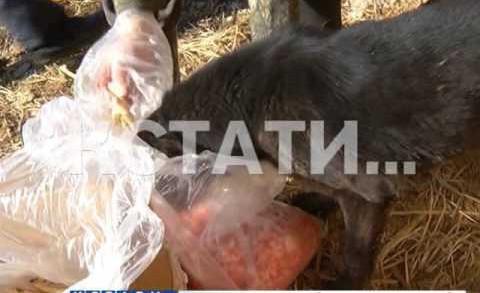 Частный приют для животных превратился в лагерь смерти, где животные гибнут от истощения