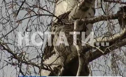 Лесной хищник посреди каменных джунглей превратился в жертву