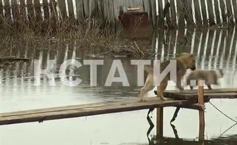 На лодках по собственным огородам приходится передвигаться жителям Уреня