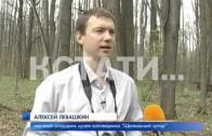 Прямую трансляцию из гнезда ястреба организовали орнитологи