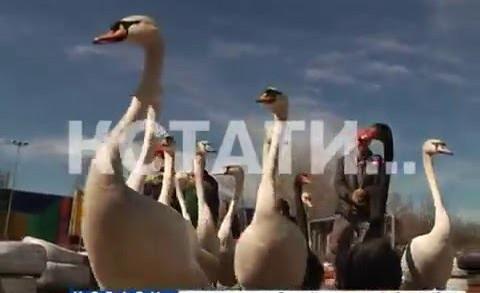 Символ Сормовского парка вернулся вернулся на летнее место обитания