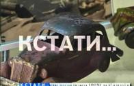 Уникальные игрушки советской эпохи представлены в музее им. Добролюбова