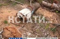 Упавший тополь покалечил двух подростков в Автозаводском районе