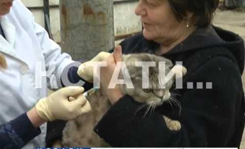 В деревне Бешенцево началась вакцинация животных от бешенства