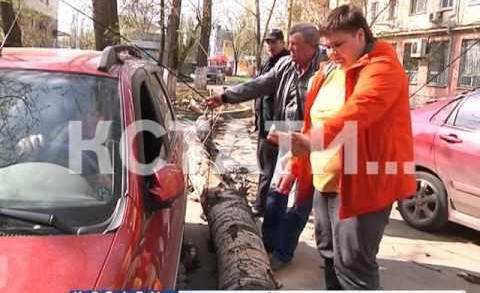 Забытое коммунальщиками дерево рухнуло на автомобиль и прохожих