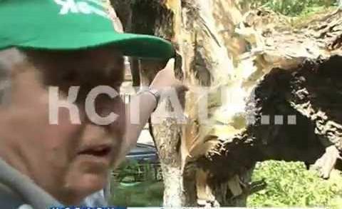 Коммунальная пропаганда — дерево рухнуло на припаркованные автомобили