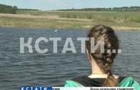 Раненый лебедь наше пристанище в Большемурашкинском районе