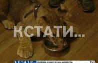 Нижегородские полицейские изъяли львицу, которую перевозили в автомобиле