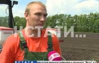 Свежий нижегородский картофель есть можно будет круглый год