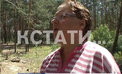 В деле защиты страны пострадала природа — военные устроили свалку в лесу