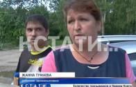 Голодомор в Ильиногорске — животные в свинокомплексе погибают из-за отсутствия кормов