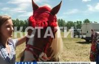 Сельскохозяйственный «опен эйр» прошел в Нижегородской области