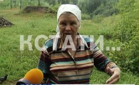 Спасатели леса загубили городской памятник природы — бобры разбушевались в Кстовском районе.