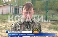 Первый за 100 лет северный олень родился в Нижегородском лесу