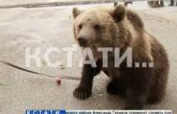 С живым медведем на прием к главе администрации пришли жители Сергача