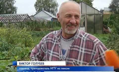 Тыквы весом в 100 кг вырастил на своем участке житель Новопокровского.