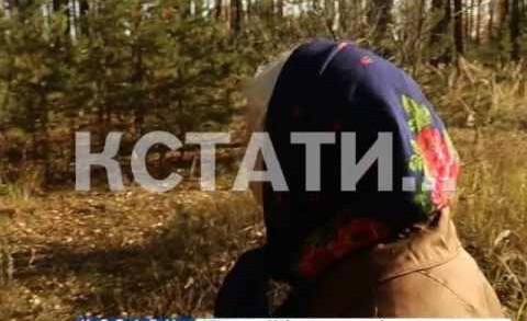 83-летняя жительница Тарасихи заблудившаяся в лесу, спасена после суток поисков