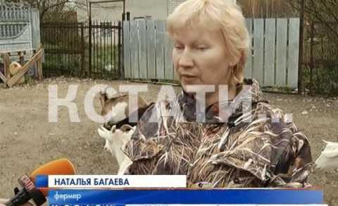 Груду павшей скотины свалили неизвестные на обочине Московского шоссе
