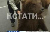Медвежье пастбище в центре города — в Дзержинске начали выгуливать медведей