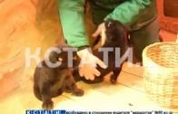 Парная зоологическая сенсация в нижегородском зоопарке