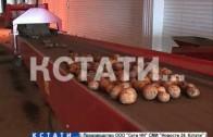 Продовольственная программа «покупай нижегородское» выйдет на федеральный уровень