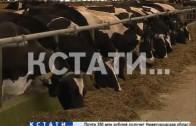 Стахановские надои в Нижегородской области