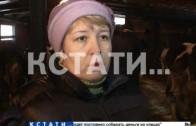 Из-за бешеной лисы растерзанной собаками в Приокском районе объявлен карантин