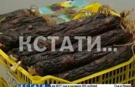 Крупнейшая в 2016 году сельскохозяйственная выставка-продажа открылась на Нижегородской ярмарке