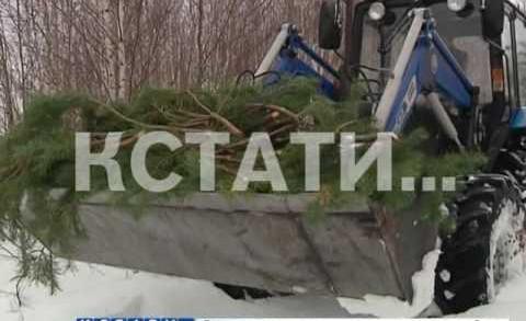 Лесники, оберегая лес от пожара, делают жителям бесплатный новогодний подарок