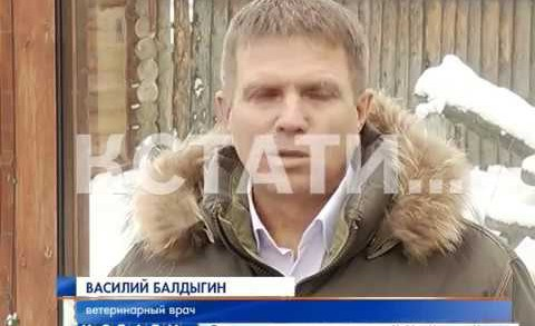 Редкая кошка поселилась в Нижнем Новгороде