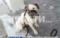 За психологический стресс собаки, водитель заплатил своей свободой.