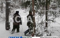 Нижегородская область вошла в число лидеров России по восстановлению леса