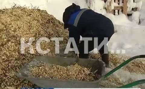 Остатки новогодних праздников попали на стол животным в нижегородском зоопарке
