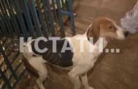 Самым громким спасением года стало вызволение узников из собачьего концлагеря