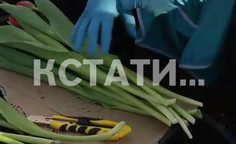 Цветочный бум в нижегородских совхозах