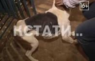 Судебное разбирательство по организации концлагеря для животных закончилось ничем