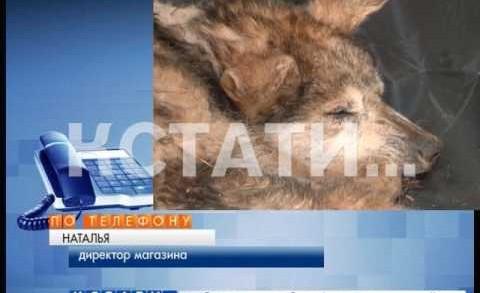 Собаке заклеили скотчем пасть и оставили умирать в лесу