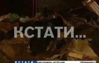 Жуткая трагедия в Приокском районе — собаки съели свою хозяйку