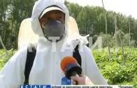 Борьбу с борщевиком начали в Нижегородской области